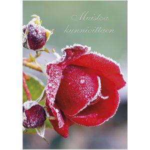 suruadressi-jäinen-ruusu