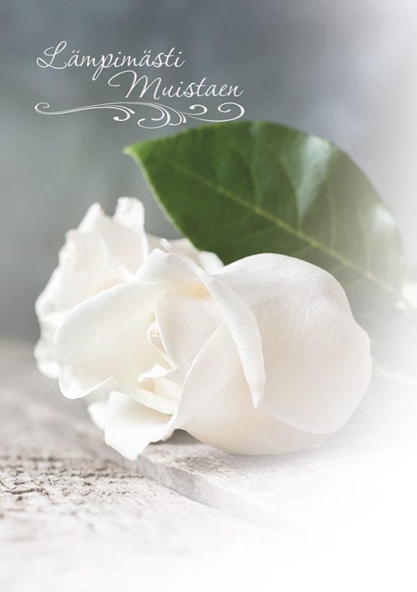 suruadressi-valkoinen-ruusu-suruvalittelu