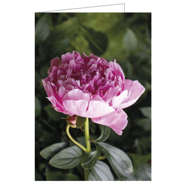 Gratulationskort-blomma