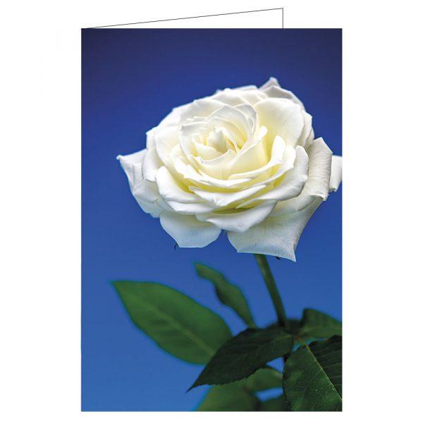 gratualionskort-vit-ros